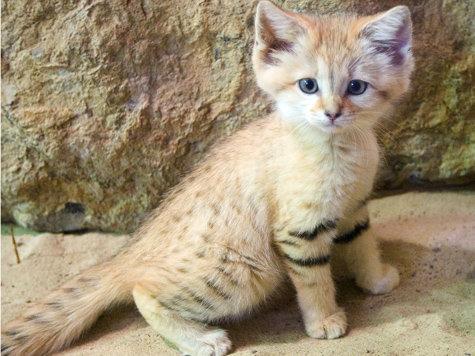 Du oder deine Haustiere als WaCa Katze! (Hilft bei langeweile!) - Seite 2 2008626358-mann-kaetzchen-python-tierquaeler-z09