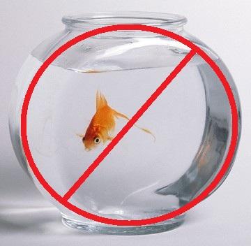 Maintenance basique du poisson rouge Petition-image-a5986af4ce0fc8b33d55f05f775d2f8b