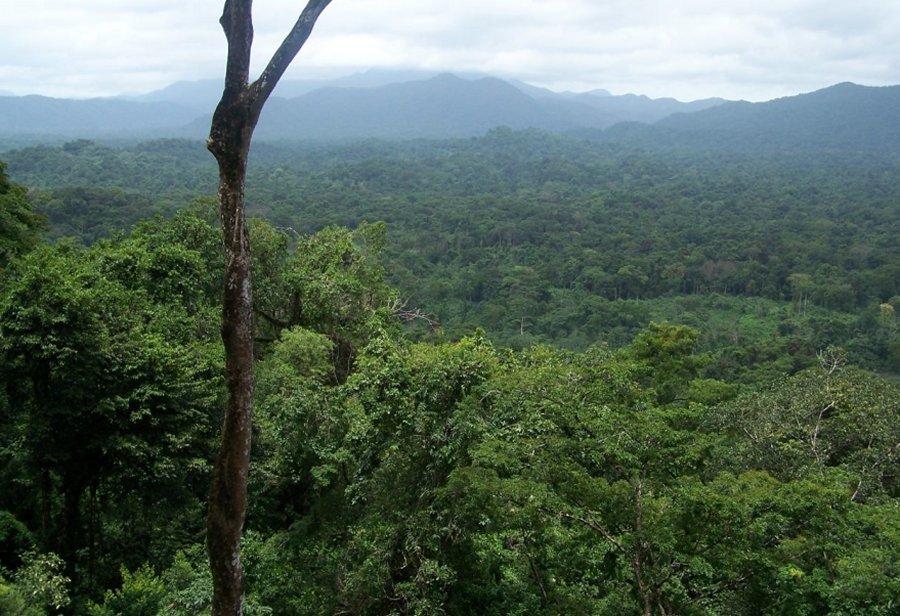 Mysterious 'White City' Hidden In Honduras' Jungle: Archaeological Excavations Have Begun RioPlatanoBiosphereReserve1