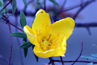 plante de jovany du 18 /01 trouvé par Martine - Page 2 Fleur_jaune_06