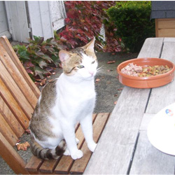 Aliments, plantes et produits dangereux pour chiens et chats Zemoren-a-table
