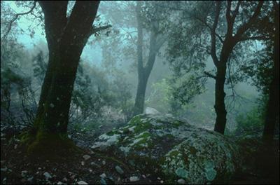 L'Énergie des arbres - Page 3 Image04