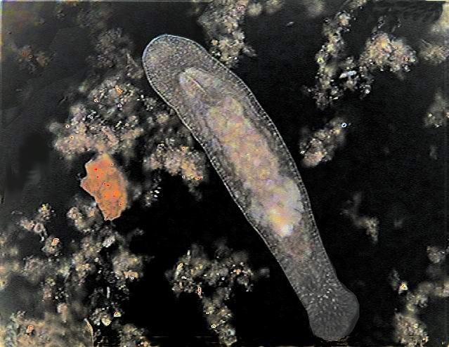 J'ai des vers dans mon aquarium Filtros%20031