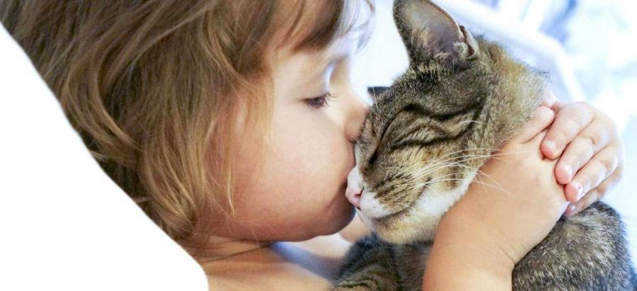 Les chats sont experts en ronron thérapie et caresses antistress Ronron-900x411