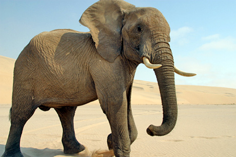 La belle histoire de l'Éléphant EyeForAnElephant