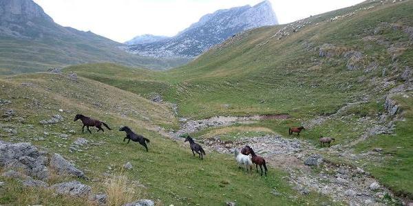 Crna Gora - Page 2 Konji