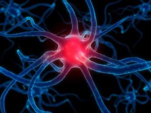 Des effets de la méditation sur le cerveau et l'organisme Immunologie5-300x225