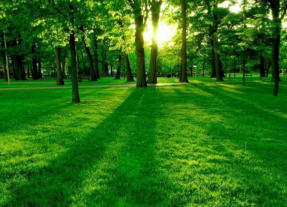 Volim zeleno - Page 32 Zelena