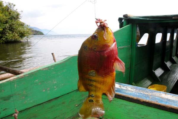 Pourquoi l'aquariophilie responsable est important pour l'avenir de notre passion Butini1-dan-Matano-19