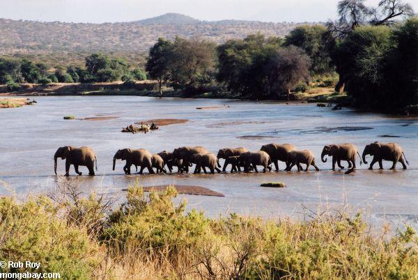 Države planete zemlje Elephant_001
