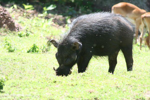 Parco Nazionale del Monte Kenya Ug3-3414