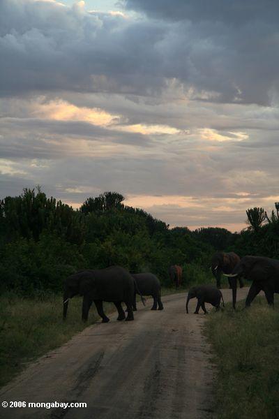 Slonovi Ug5_4976