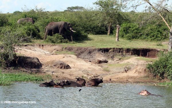 Slonovi Ug5_5475
