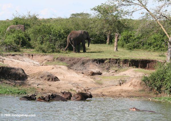 Slonovi Ug5_5476