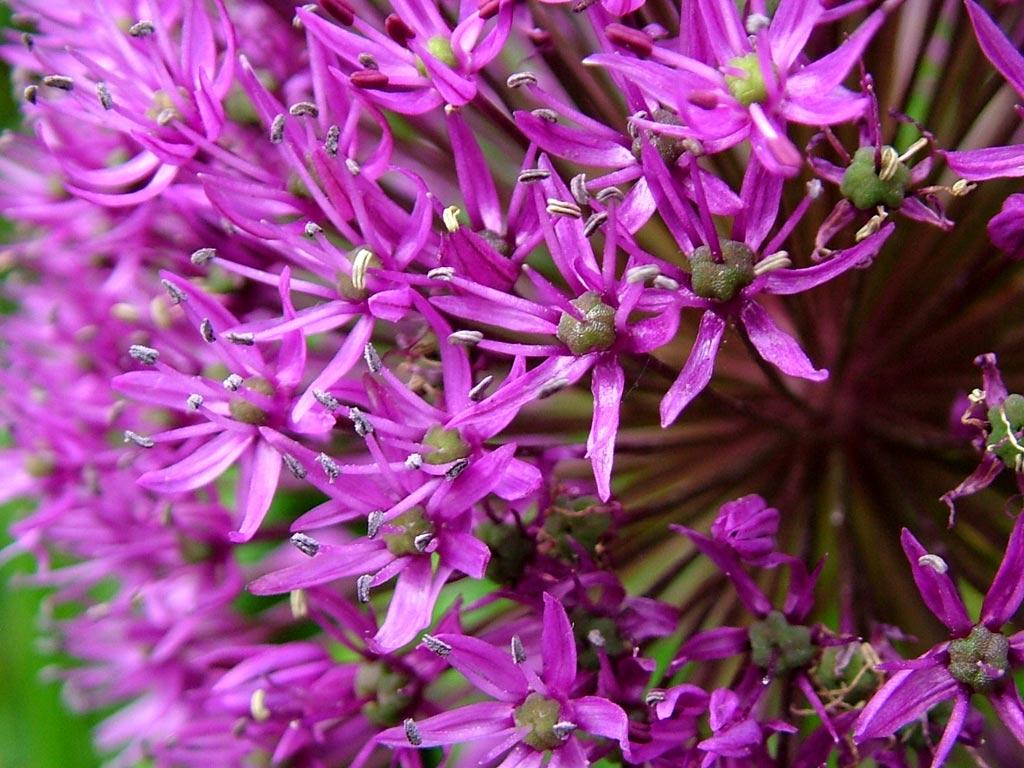 Volim ljubičasto Tiny-purple-flowers