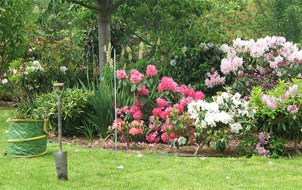 Vrtovi - Page 3 Rhododendron-shovel