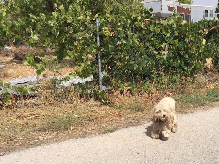 The Elephant Dog of Isidoros Ed1