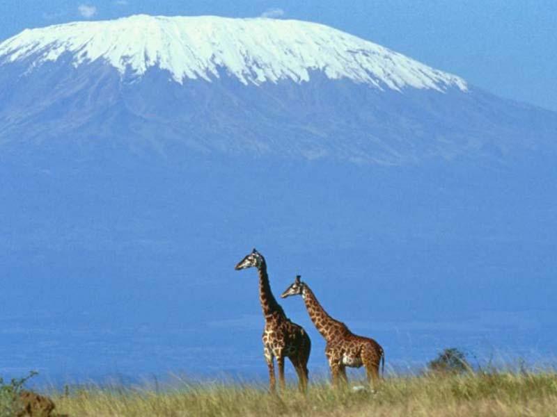 Le Kilimanjaro (Trouvé par xilure) MountkilimanjarofromAmboseli
