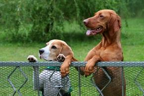 Cloturer son jardin (grillage)   Cloture-chien