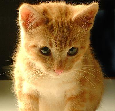 Quiero ver... - Página 4 Gato