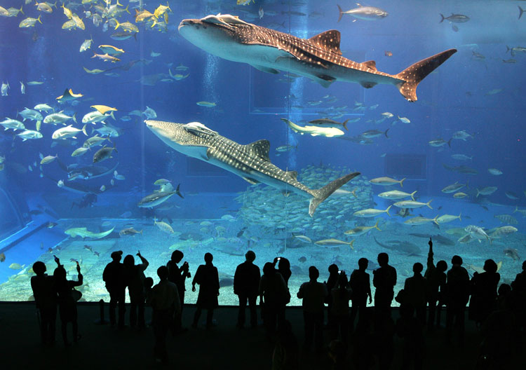 Dubai Akvarium
