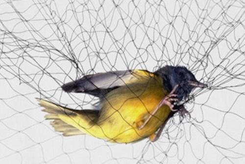 நம்பிக்கை சிறகு -   கவிதை Birdinmesh