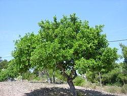 Alcune delle mie mele E410-farina-di-semi-di-carrube_clip_image001