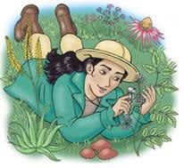 Le erbe e le piante della salute Erbe-medicinali