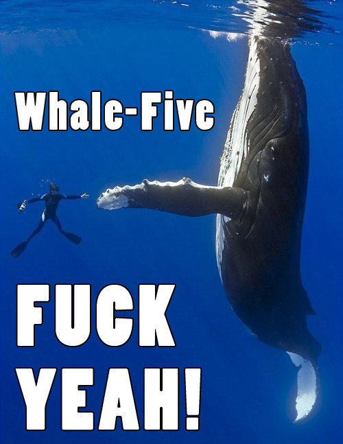 FUNNY PICTURES THREAD Whale-Five-FUCK-YEAH