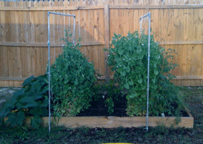 Trellis Placement Support_middle