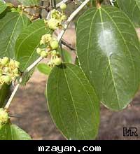 صور لبعض الأعشاب وفوائدها 63_20757434df2b4a3959