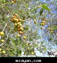 صور لبعض الأعشاب وفوائدها 63_20757434df2b4ad78c