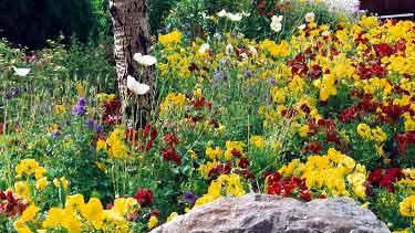 عالم البيئة 7 Flowers