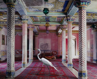 Karen Knorr: los animales también van al museo 52-400x324