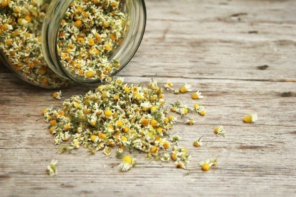 12 Healing Herbs You Need to Grow in Your Medicinal Garden Chamomile-tea-2-600x399