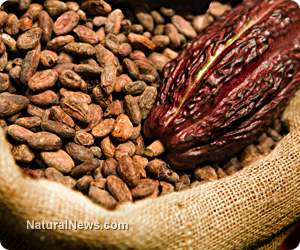 Cacao found to be a 'defense shield' against strokes Cacao-Plant-Pod-Beans
