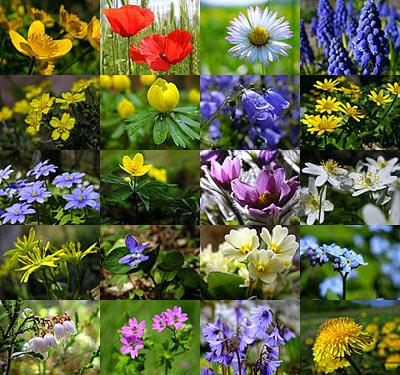 la parole du jour Flower-pictures