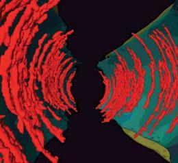 The astonishing  language written on microtubules, amazing evidence of  design 451124a-i4.0