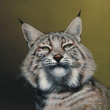 Risovi 110_Lynx_II