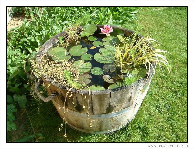 mini jardins d'eau Tonneau02