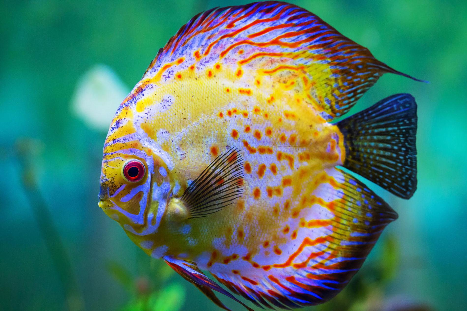 Projet Poisson-discu-aquarium