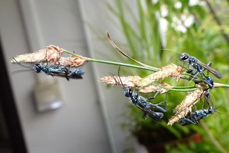 Bộ sưu tập côn trùng 2 - Page 2 DSC03827%20(14)
