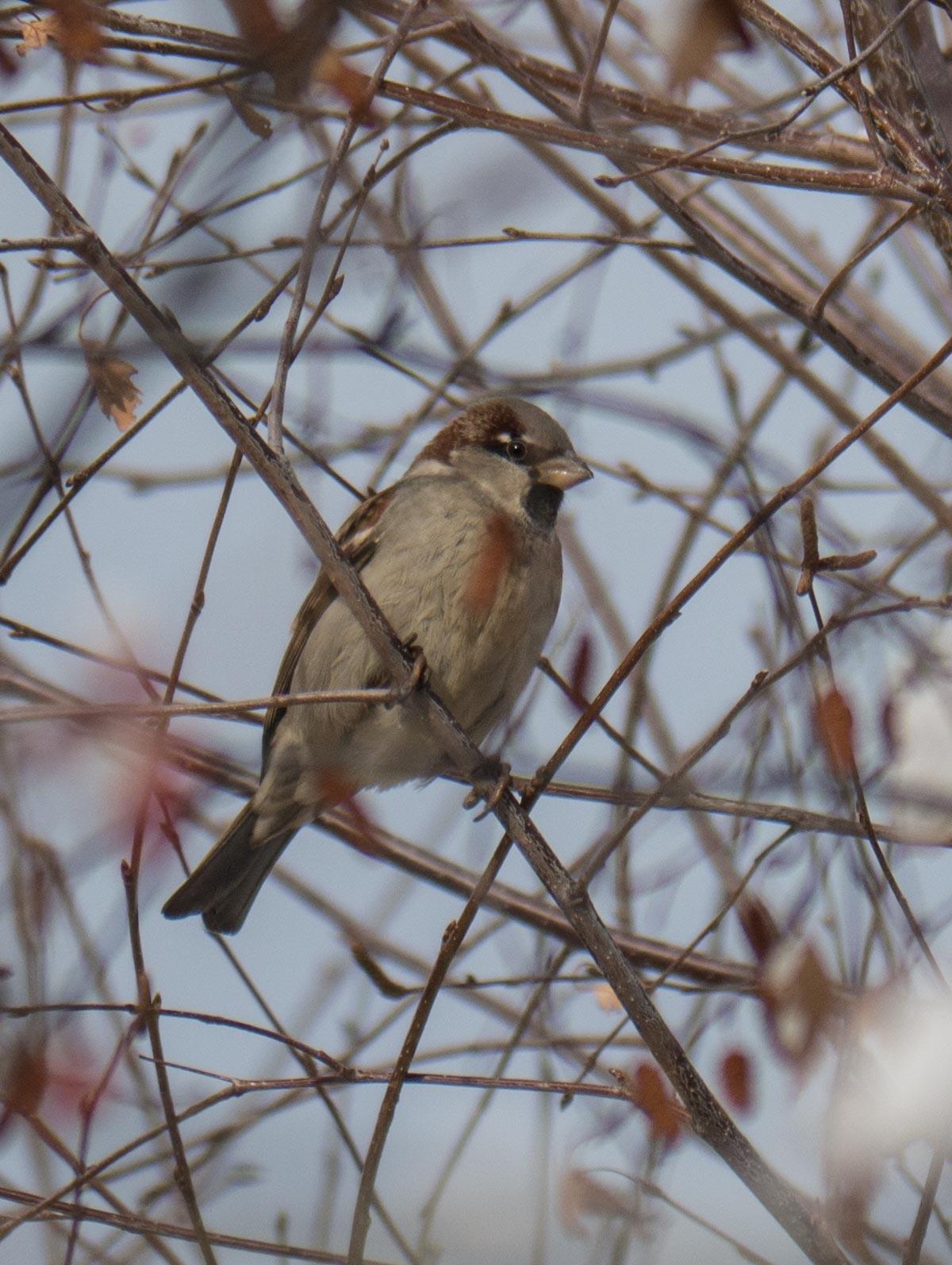 Oiseaux du Qeyras en hiver 1130610