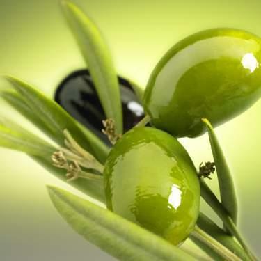 يكاد زيتها يضيء Olive_oil