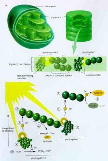 معجزة الحياة على الأرض والنبات Blasteed11
