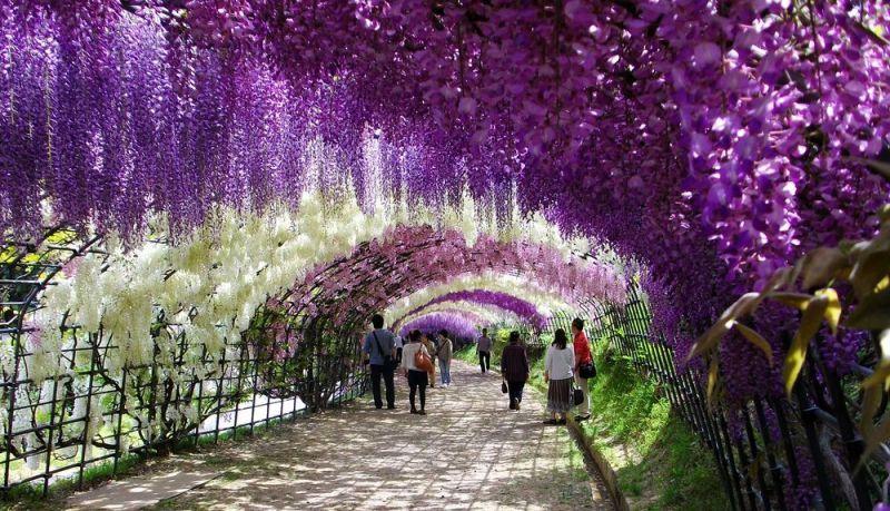 Quelle est votre vision sur Paradis Kawachi_fuji_garden1