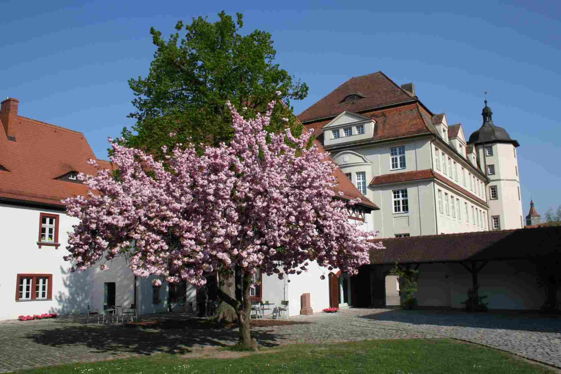 Post Card From.... Schlosshof