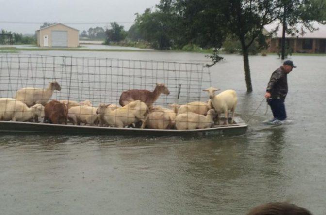 Louisiana Flood Update Animals759x500-672x443