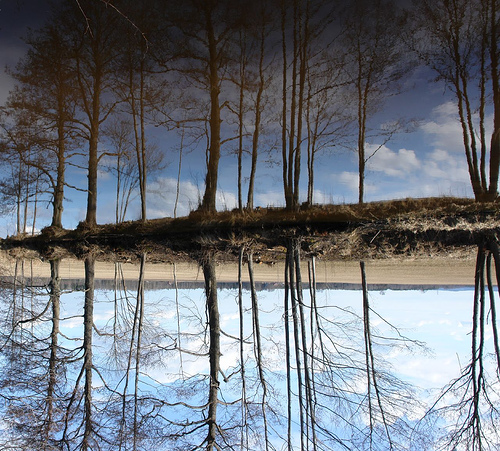 صور خداع بصري وفن - روعة - Trees%20sky%20and%20water%20optical%20illusions