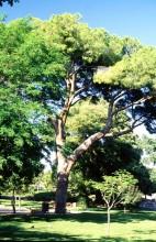 Les Parcs & Jardins de la Ville de Nice T_Nice_47